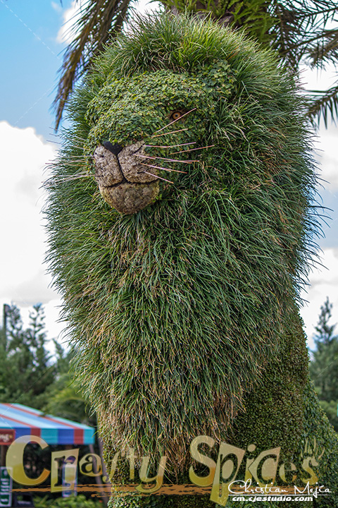 The Lion topiary at Busch Gardens